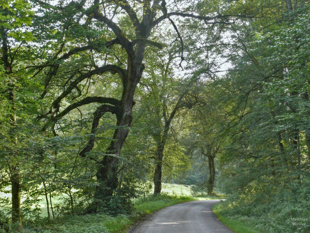 Fahrweg mit grüner Allee