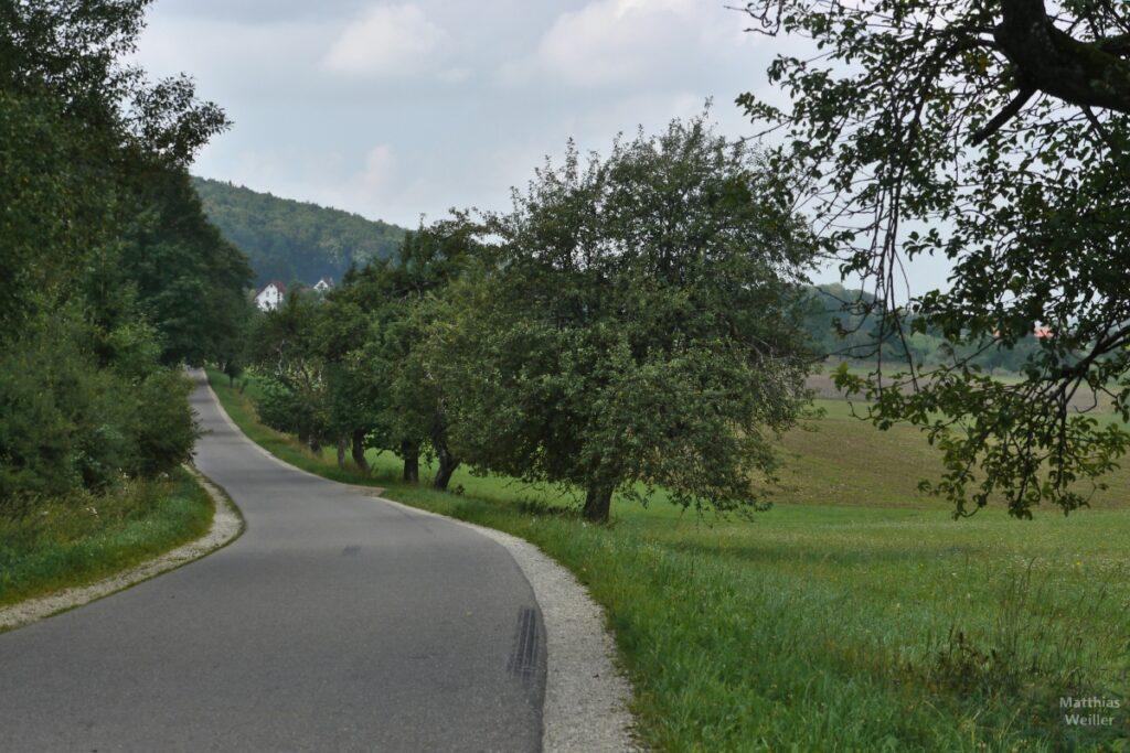 Straße mit Obstbaumallee