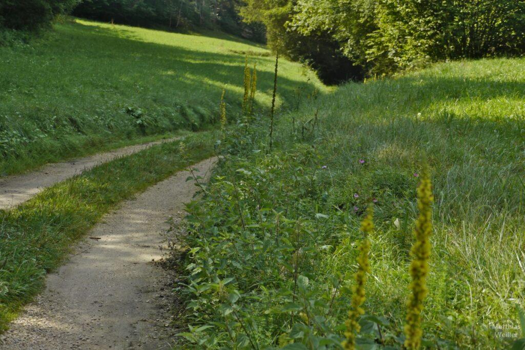 Fahrweg mit wilder Wiese im Schandental
