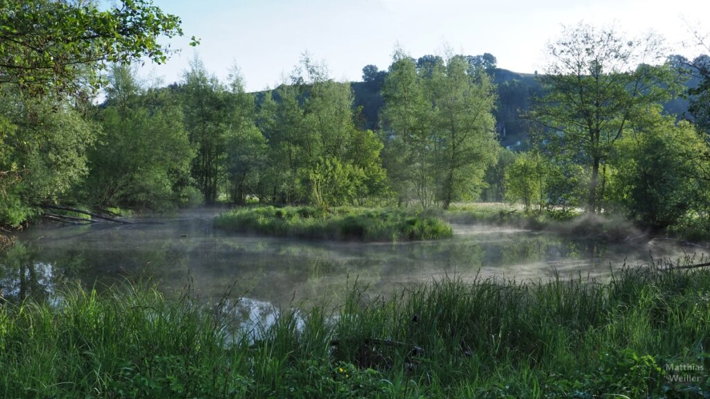 Nebenarm mit Flussinsel unter Nebel in der Lauter-Aue