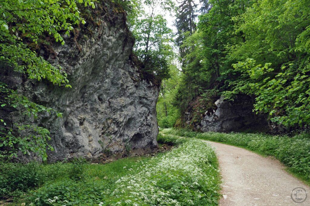 Glastal mit Felsen unter Weißblühern