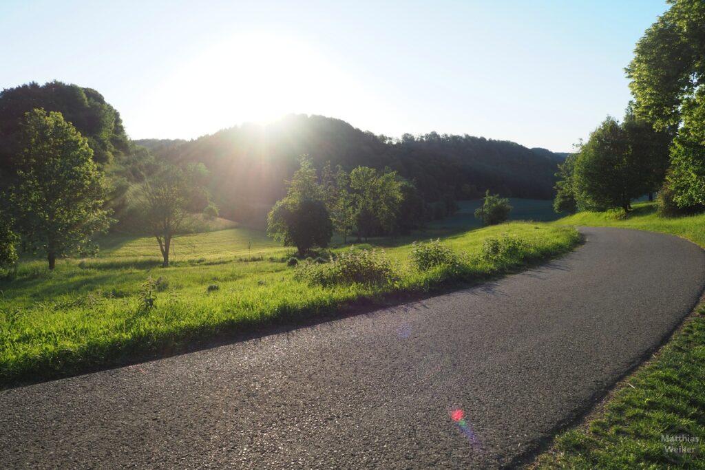 Morgensonne im Gegenlicht an Straßenkurve mit Streuobstwiesen