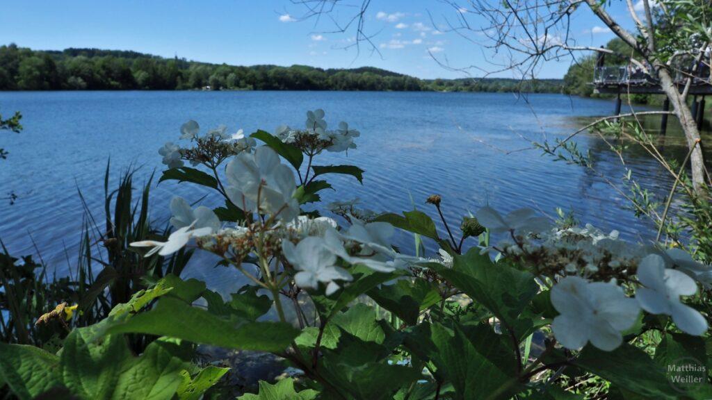 Weiße Blüten vor Baggersee Zielfingen