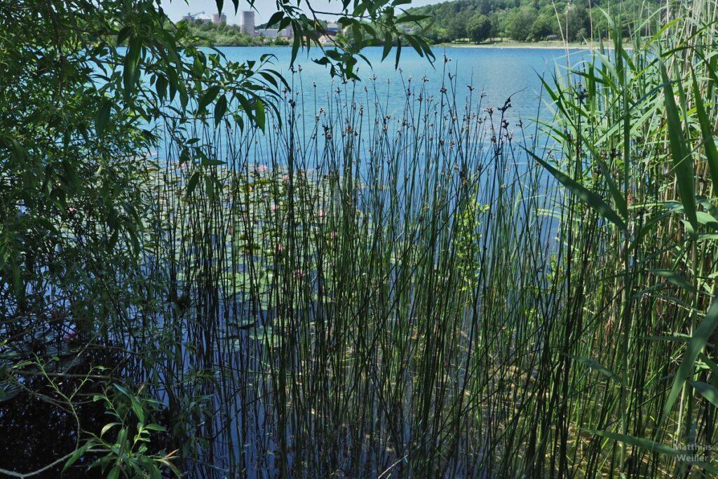 Blick durch Schilf und Seerosen auf blauem Baggersee, mit Kiesförderanlage im Hintergrund
