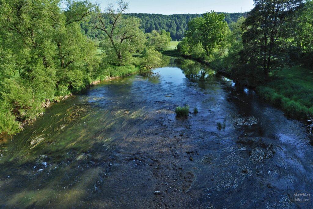 Die Donau mit Schwemmgras, grüne Ufervegetation