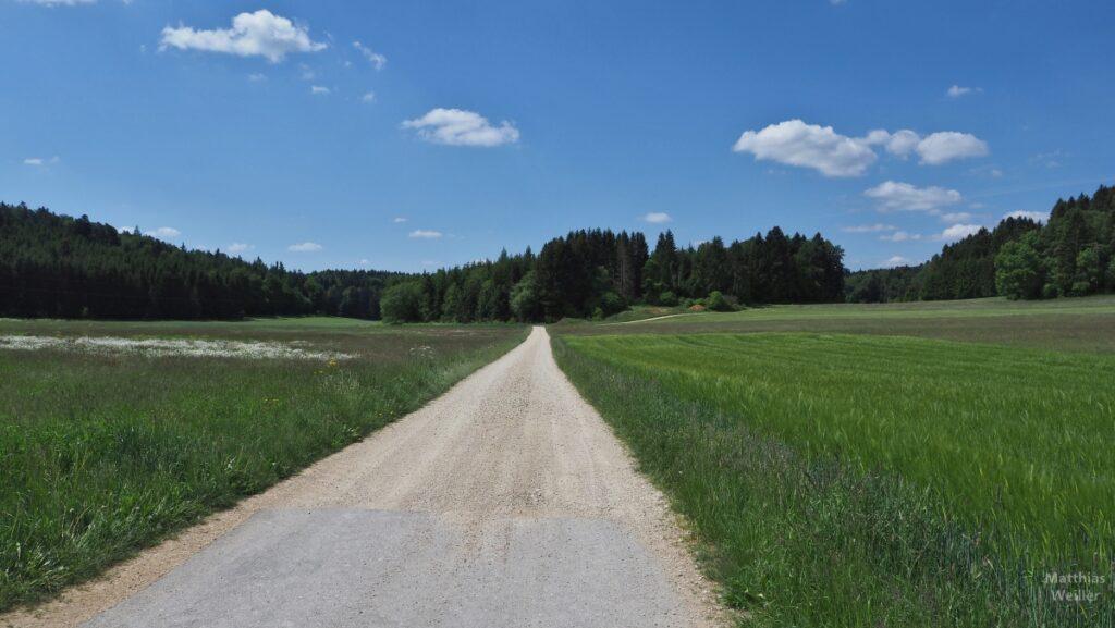Gerade Flucht einer Piste durch Feldwiesen auf Waldrand zu