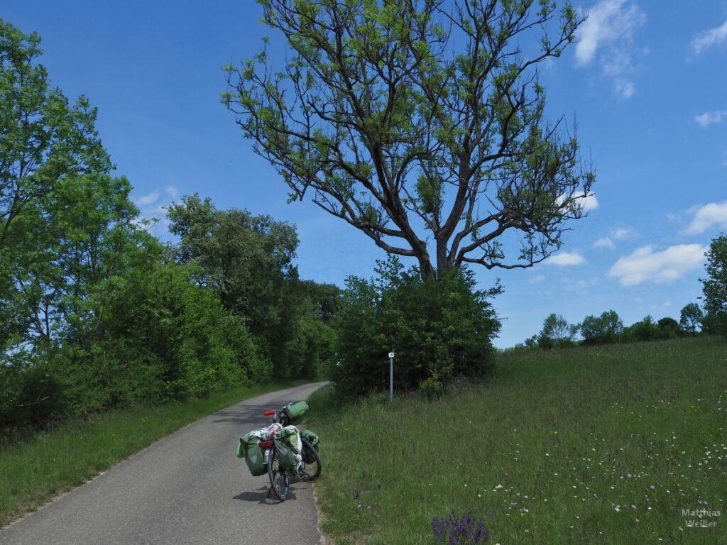 Grünes Reisevelo mit Albwiese, Büschen, Baum