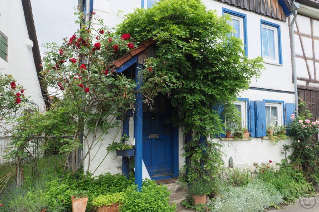 Verwunschener Hauseingang mit wuchernden Grün, Rosenstock, Ziegeldach, blaue Tür und Läden