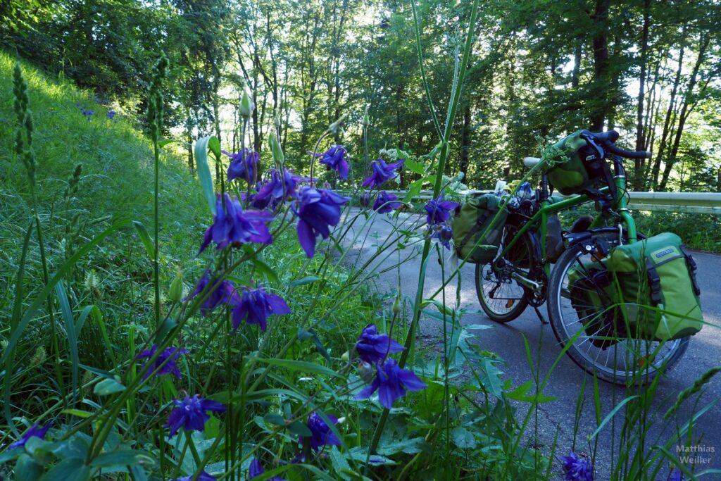 Blaue Glockenblumen vor grünem Reisevelo