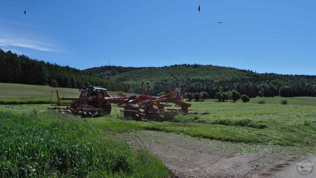 Traktor mit Heuwender auf Albwiese, Raubvögel darüber