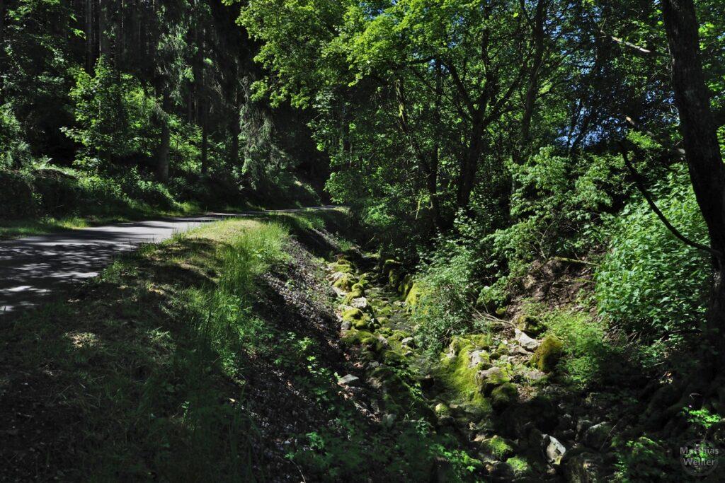Halbschattiges Moosbachtal mit Radweg