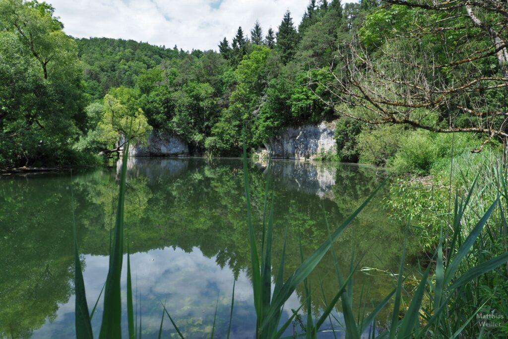 Seeähnliche Donauschleife mit Schilf und Felsen