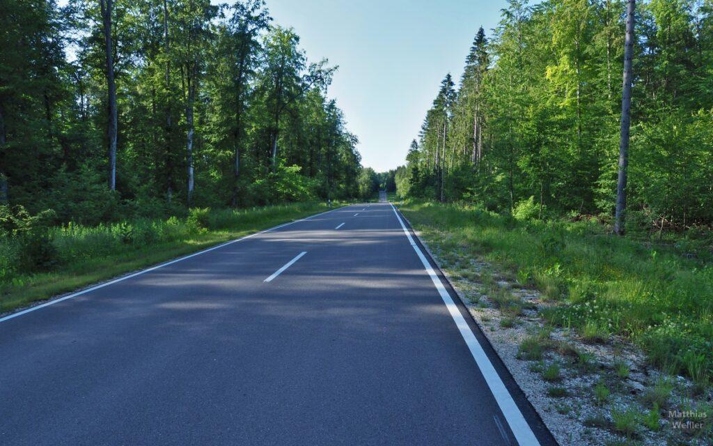 Gerade, perspektivische Straßenflucht, seitlich Wald