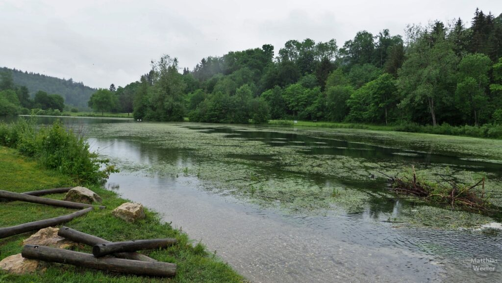 Lauchertsee mit Wasserpflanzenwuchs