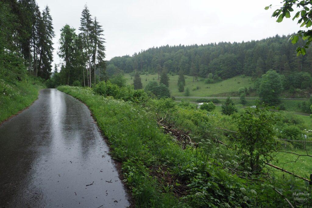 Radweg im Regen glänzend durch Wald-/Wiesental