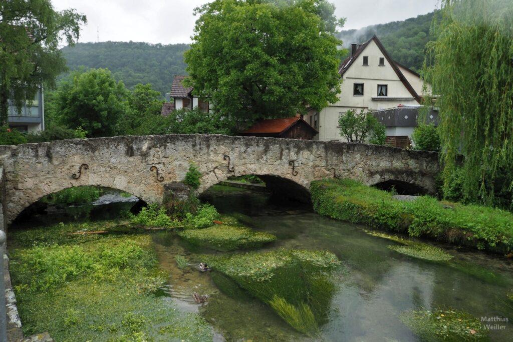 Steinbogenbrücke über die Echaz mit grünen Wasserschlingpflanzen